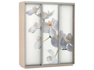 Шкаф-купе 3-х дверный Трио Фото Орхидея